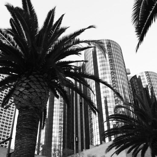 palm trees bon
